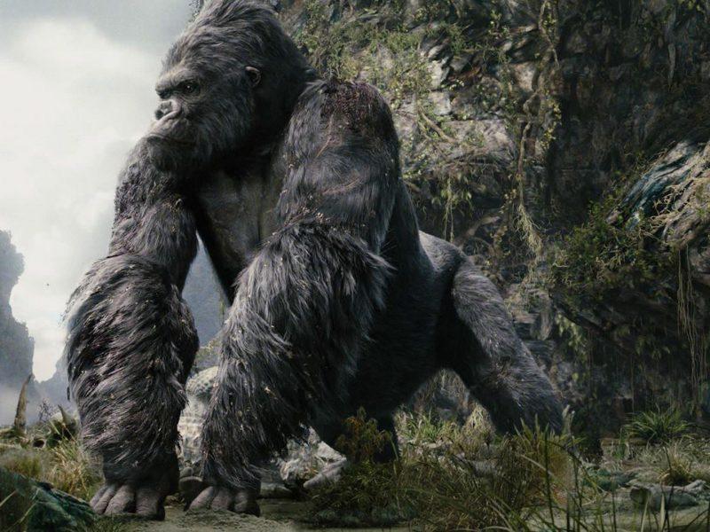 gorila prekiauja pasirinkimo galimybėmis