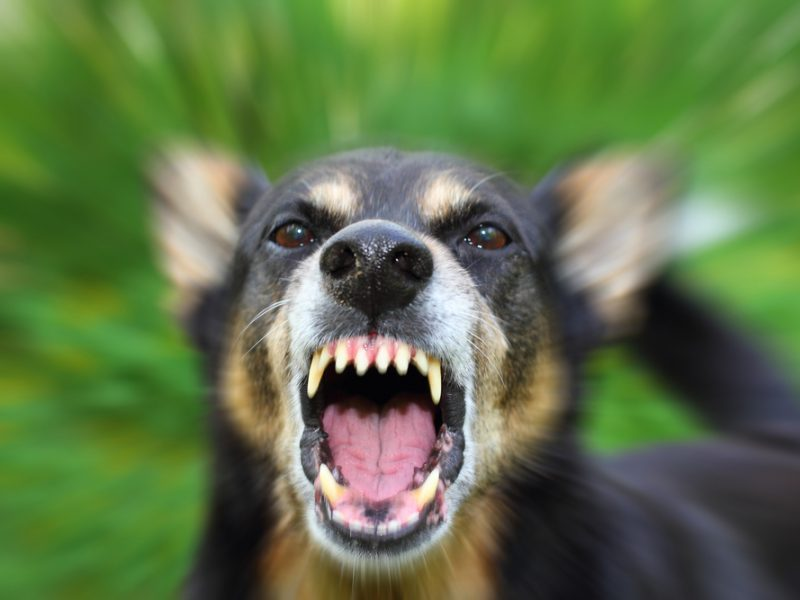 Aktyvus laisvalaikis Nemuno saloje gali apkarsti: gąsdina šunys be antsnukių