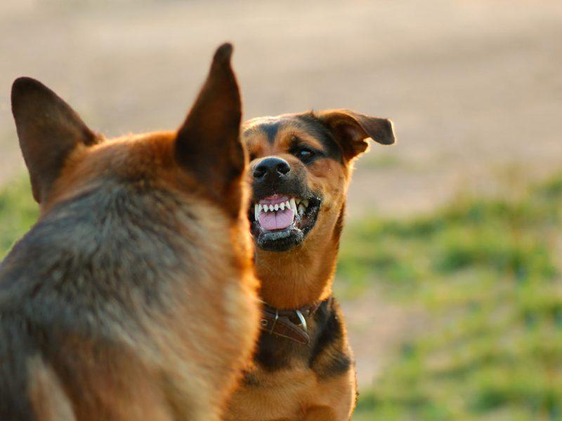 JK policija kuria šunų DNR duomenų bazę