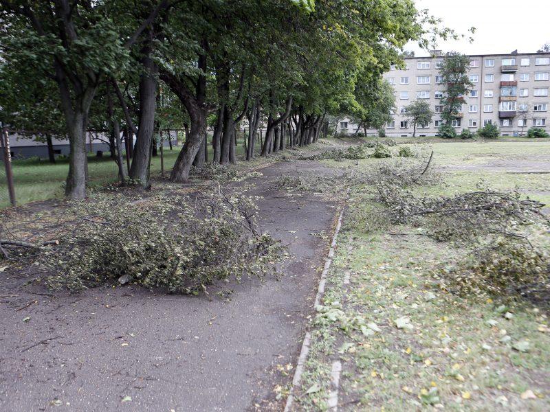Stadione nugenėjo medžių šakas