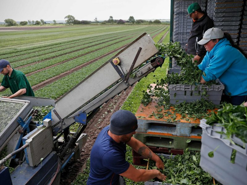 Lietuviams darbas Jungtinėje Karalystėje atsieis brangiau