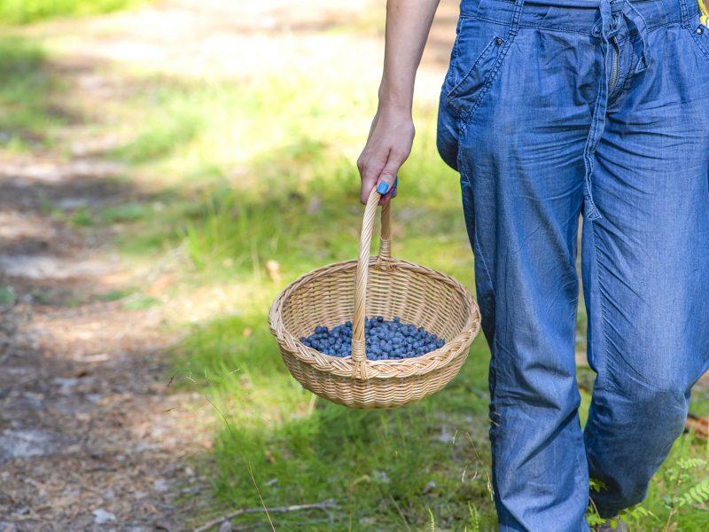 Mažas mėlynių derlius augina jų kainą, verslą trikdo eilės pasienyje