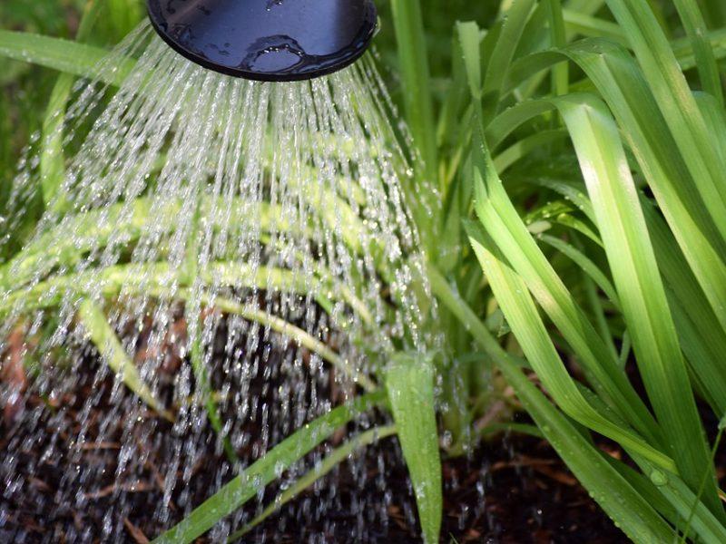Lietus negelbėja: stichinė sausra dar laikosi penkiose savivaldybėse