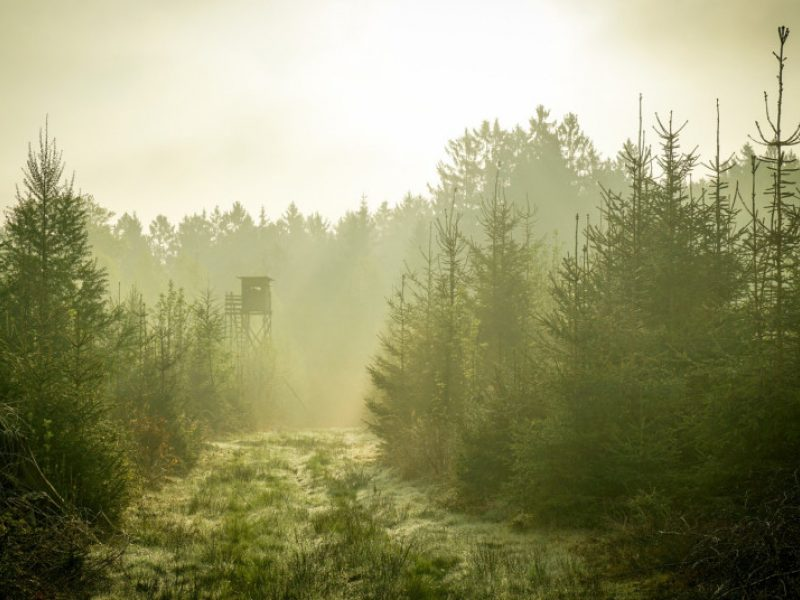 Aplinkos ministerija derinimui pateikė naują Medžioklės taisyklių projektą
