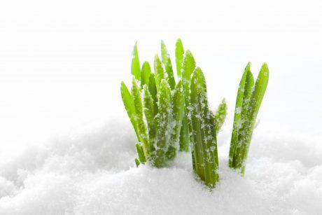 Pavasario pradžioje į Lietuvą sugrįžta žiemiški orai