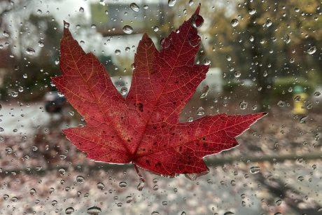 Orai nedžiugins: bus niūru, vėsu, kasdien lis