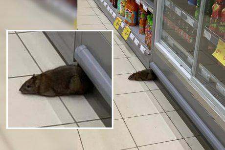 prekybos žiurkėmis sistemos
