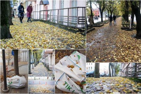 Beda pirštu į lapais nuklotas Kauno gatves: tikrų tikriausia čiuožykla!