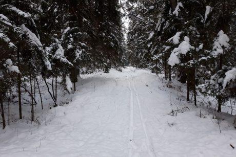 Mama šaltą naktį atvežė vaikus į mišką ir išrengė nuogai